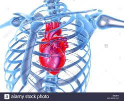 Good news translation for your heart will always be where your riches are. Is It Possible For A Knife To Pierce Through The Chest And Heart Quora