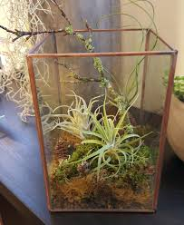 Air Plant Terrarium Air Plant Terrarium In Portland Or Botanica Floral Design