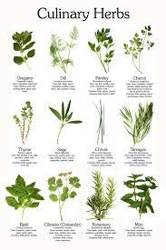 herbs herbal cines herb garden cd 29 books by infocraft 4 99