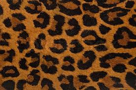 Leopard Pattern Amazing Leopard Print Pattern Stock Photo Colourbox