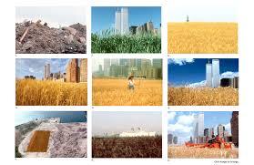 A <b>Wheat Field</b>