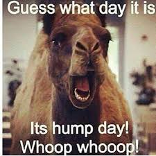 Funny Hump Day Quotes Cool Hump Day Pictures Photos And Images For Facebook Tumblr