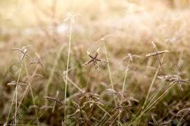 dry grass field background. Stock Photo - Yellow Dry Grass Field. Golden Summer Background. Field Background S