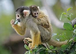 Amazon Com A1 Mama Baby Monkey Nature Wildlife Wall