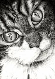 realistic cat drawing in pencil. Brilliant Pencil 20 Beautiful Realistic Cat Drawings To Inspire You  Fine Art And You  Painting Digital Art Illustration Portrait For Drawing In Pencil O