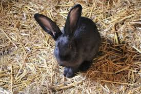 do rabbits need bedding which is best