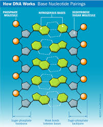 Dna Structure Howstuffworks