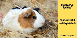 best guinea pig bedding reviews tips