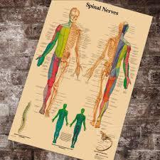 Chiropractic Wall Charts Anatomy Pathology Anatomical Spinal Nerves Chart Classic