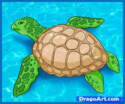 Small Picture 43 best Darwin Day images on Pinterest Sea turtles Sea turtle