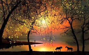 beautiful nature images horses hd wallpaper and background photos