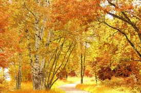outdoor woods backgrounds. Fine Backgrounds Intended Outdoor Woods Backgrounds S