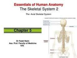 human skeletal system essay  human skeletal system essay