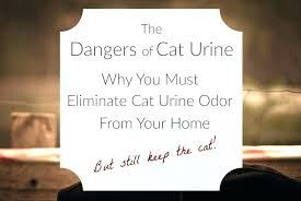 stain remover removing urine stains from hardwood floors hardwood floor cleaning how to protect hardwood floors from dog removing urine