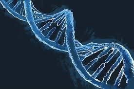 Image result for DNA
