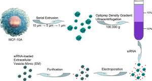 Electroporation Exosome Rna