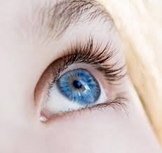 Pics Of Eyes Blue Eyed Humans Have A Single Common Ancestor Sciencedaily