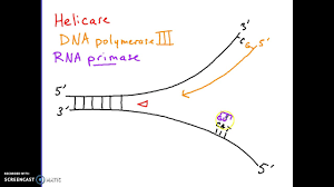 Dna Replication Process Youtube