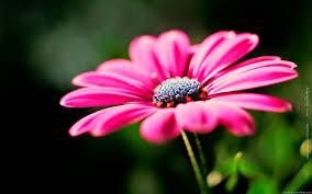 wallpaper desktop widescreen flowers. Delighful Flowers Widescreen Wallpaper Flowers On Desktop E