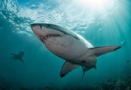TV: Shark Week 2021 Schedule Highlights ...