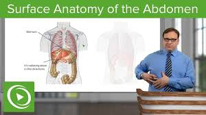 Independent contraction of this muscle aids in rotation of the trunk 40. Surface Anatomy Of The Abdomen Anatomy Lecturio Youtube