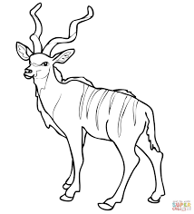 Small Picture African Woodland Antelope Kudu coloring page Free Printable