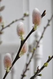Весеннее пробуждение: лучшие изображения (8) | Весна ...