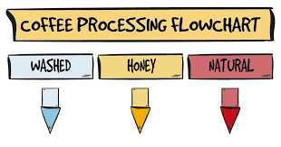 Coffee Production Process Flow Chart Processing Methods Washed Honey Or Natural Brewersclub