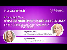 Embryo Grading Chart Embryo Grading And Quality Assessment Explained
