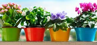 Картинки по запросу домашние растения
