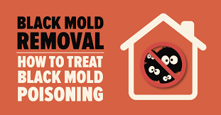 Health Effects of Black Mold - Risks, Symptoms & Dangers   Mold Busters