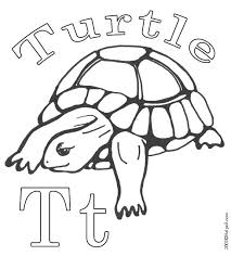 Small Picture 19 best T is for Turtle images on Pinterest Box turtles