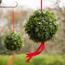 Buy festive ivy ball Hedera Living ivy ball: £39.99 Delivery by Crocus