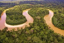 giant amazon river fish. Brilliant Amazon Aerial View Over The Amazon River For Giant River Fish G
