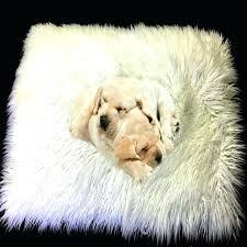 animal fur rugs animal fur rugs awesome dog pet mat cat mat white faux fur cushion animal fur rugs
