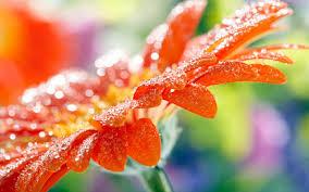 desktop wallpaper flowers high resolution. Wonderful High Nature Wallpaper Hd For Desktop Free Download Throughout Desktop Wallpaper Flowers High Resolution L