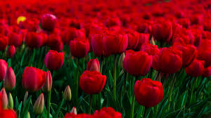 rose garden jpg