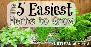 how to grow a herb garden. The 5 Easiest Herbs To Grow (via Survival At Home) How A Herb Garden P