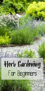 herb gardening for beginners boots