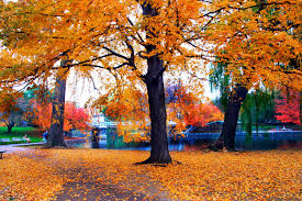Image result for fall colors