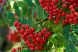 Warmer Weather Raises Concerns For Michiganu0027s Fruit Growers « CBS Fruit Trees In Michigan