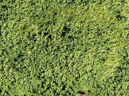 tall grass texture seamless. Explore These Ideas And Much More! Tall Grass Texture Seamless