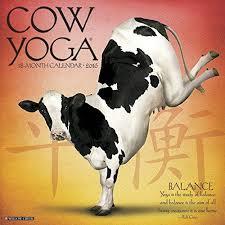 <b>2016</b> Cow <b>Yoga Wall</b> Calendar by Willow Creek Press http://www ...