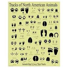 Herbivores Wild Animal Best Blog Wild Animal Paw Print