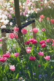 Small Picture A Long Lasting Spring Border Idea with Tulips Queen of Marvel