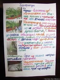 Проект по окружающему миру класс Комнатные растения Блог Милы проект по окружающему миру 1 класс Комнатные растения