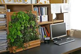 Office gardening Lot Plant Noyardrequiredurbangardeningforoffice Powerhouse Growers Powerhouse Growers No Yard Required Urban Gardening Solutions