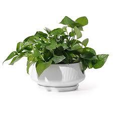 large plant pots potey 8 8 inch