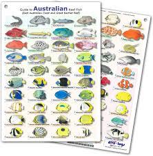 Australia Reef Fish Id Card Waterproof Double Sided Card