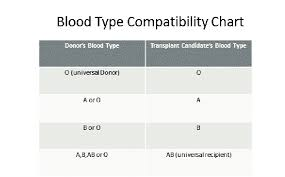 Universal Blood Type Chart Blood Type Compatibility Chart Download Scientific Diagram